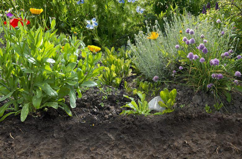 Sol de l'année 2017 est le «sol de jardin»