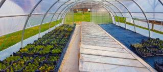 Nous produisons pour tous les jardiniers des plantons de légumes, de fleurs, de plantes médicinales et aromatiques labélisées Bio Suisse et Prospecierara.